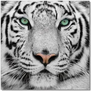 "The Power of Ancient Magic ""White Tiger"""